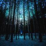 Noc w lesie, czyli jak przeżyć fajną przygodę