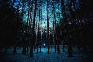 Noc w lesie