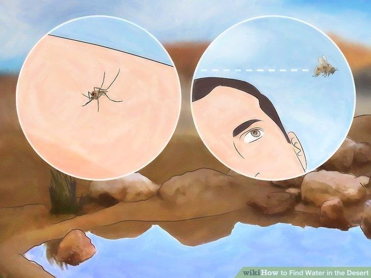 Jak znaleźć wodę na pustyni - owady