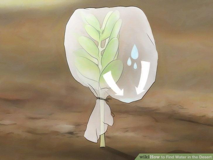 Zbieranie wody z roślin przy pomocy folii